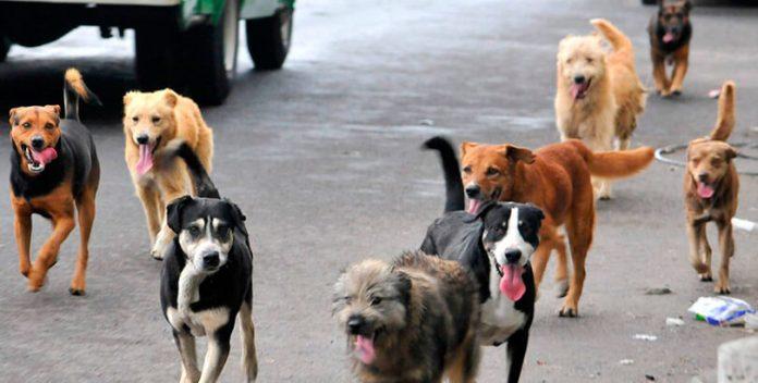 Cárcel para los que no esterilicen a sus mascotas