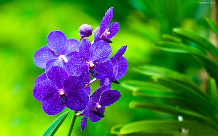 Las competencias de las flores de bach