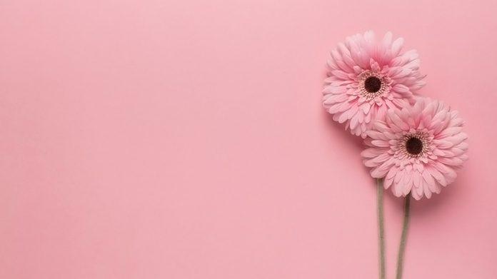 dos flores rosadas