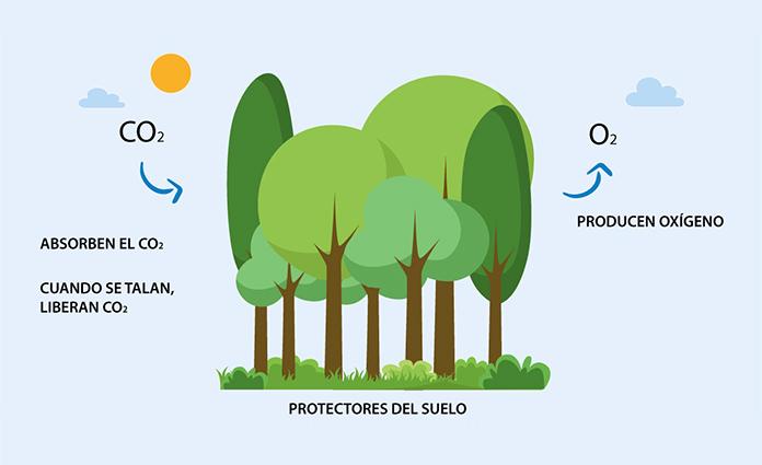 Funcion de los árboles en la Tierra