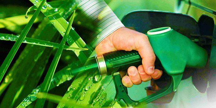 El combustible diésel ecológico a partir de algas está cerca de ser una realidad
