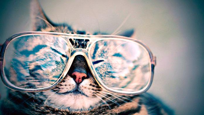 gato co-autor artículo de física