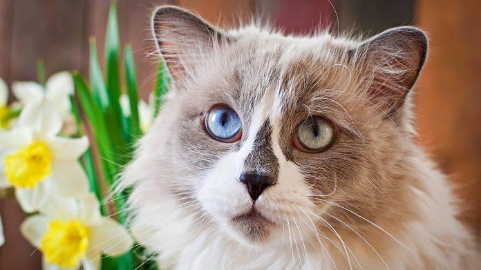 gato junto a narcisos