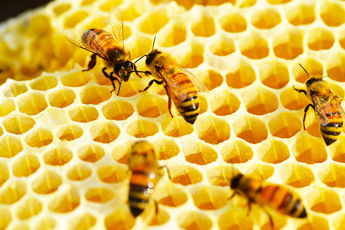 Orificios de un panal de abejas