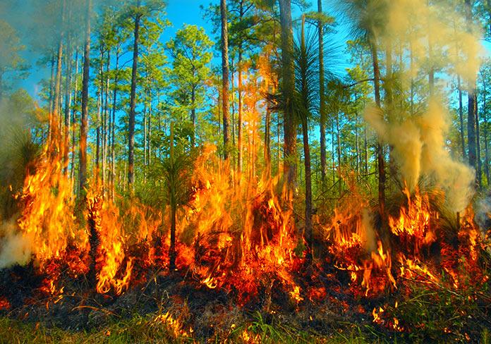 Van 6 mil 506 incendios forestales este año