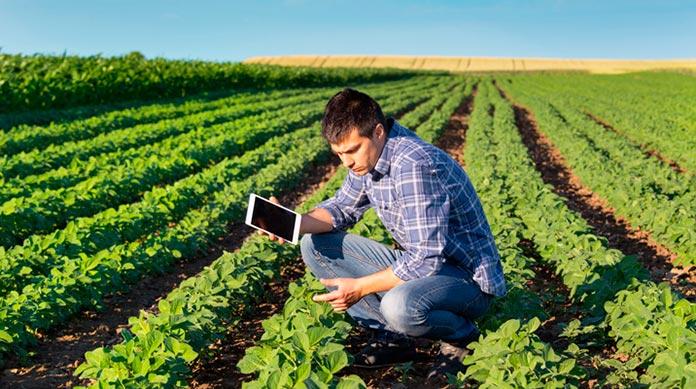 Ingeniero ambiental analizando un campo de cultivo
