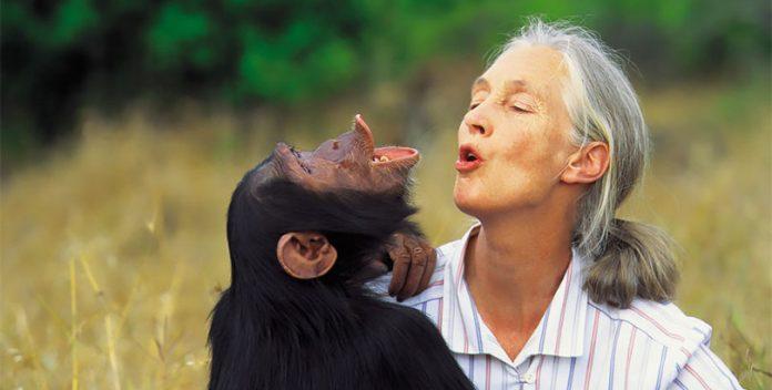 El documental sobre Jane Goodall en