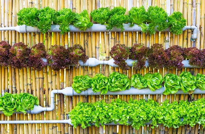 Plantas para jardines verticales las mejores variedades - Jardin hidroponico ...