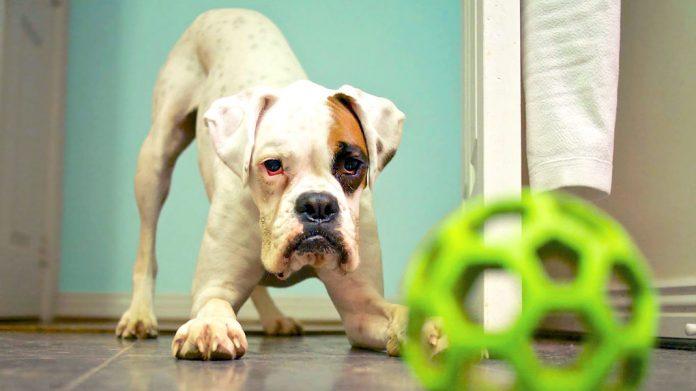 Juegos con perros: 50 divertidos juegos que puedes hacer con tu perro en casa