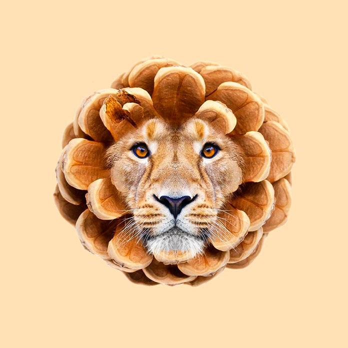 Pine cone lion (Les Creatonautes)
