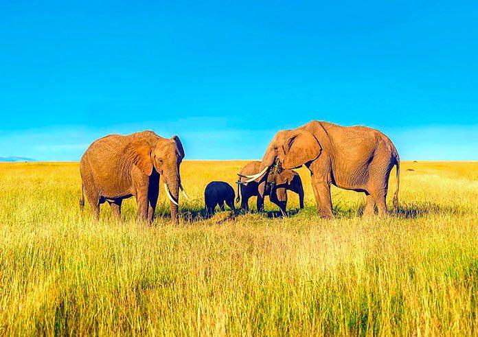 El liderazgo femenino es la norma en 6 especies de mamíferos