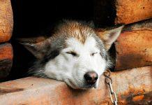 ¿Has sido testigo de maltrato animal? Te contamos cómo reconocerlo y denunciarlo.