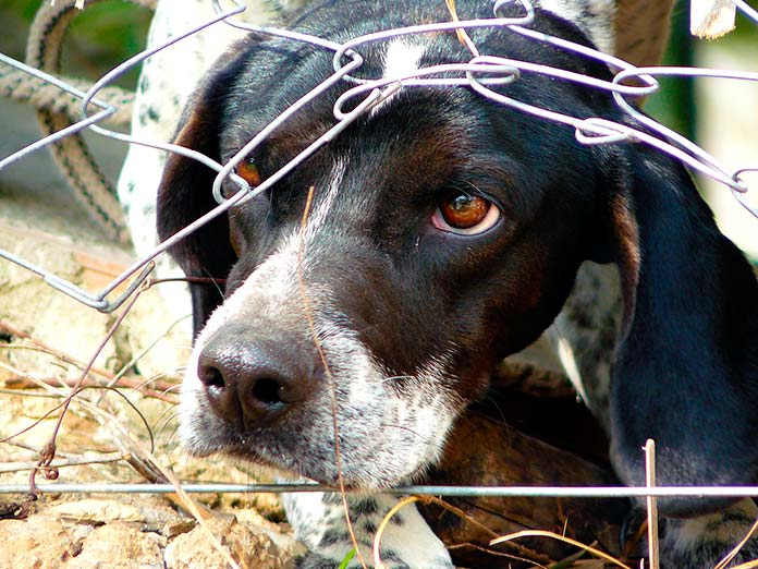 Maltrato animal - Perro sacando la cabeza a través de una valla