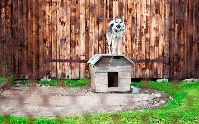 Maltrato animal - Perro encadenado sobre una caseta (