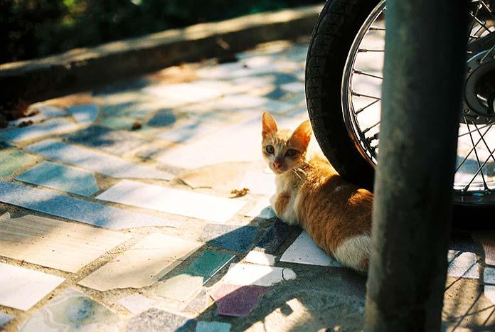 Maltrato animal - Gato en la calle