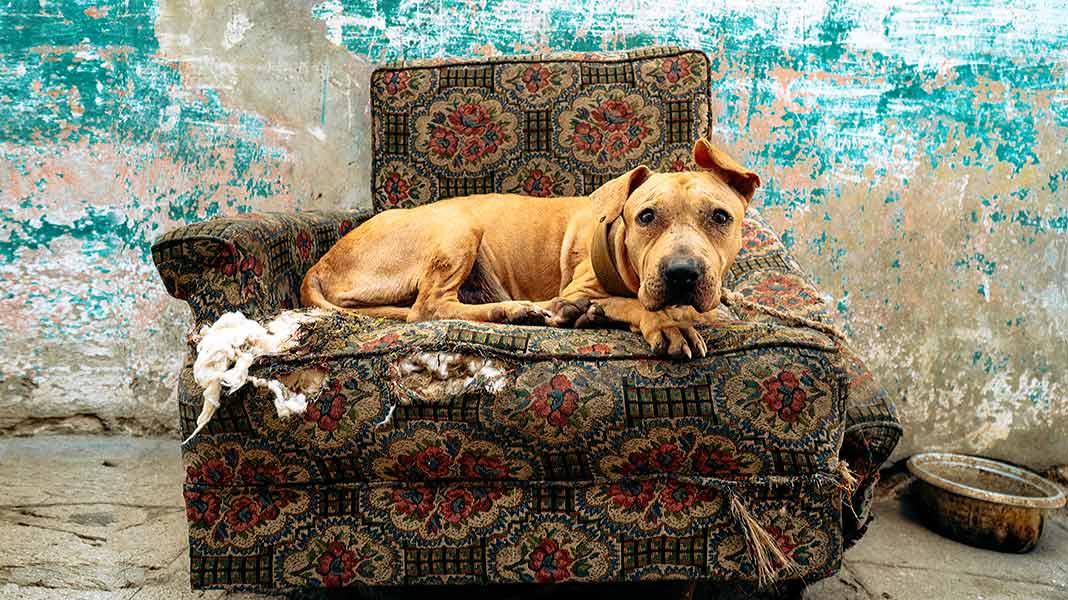 Maltrato animal: qué es y cómo puede evitarse