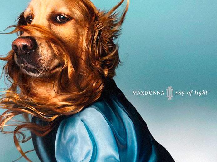 Maxdonna, la versión canina de Madonna