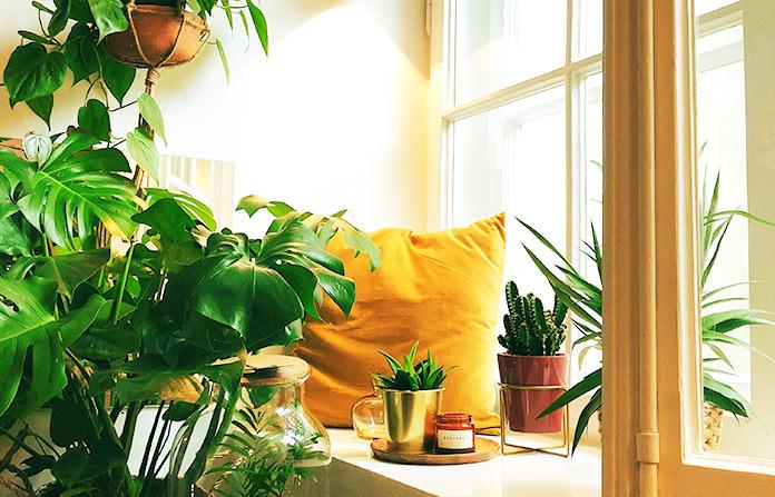 Emprendimiento ecológico - Diseño de mini jardines urbanos