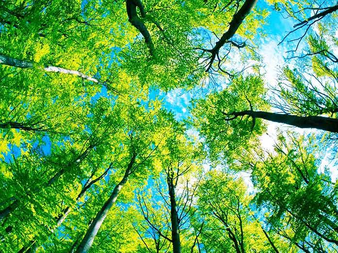 Imagen enfocando una vista hacia arriba