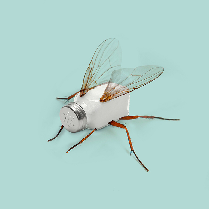 Salty fly (Les Creatonautes)