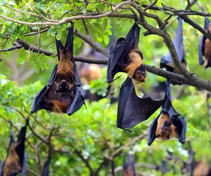 murciélagos colgando de un árbol