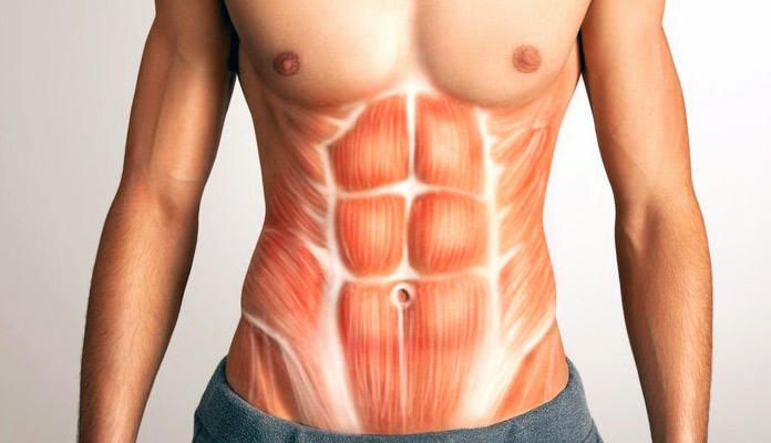 Músculos olvidados: Abdomen