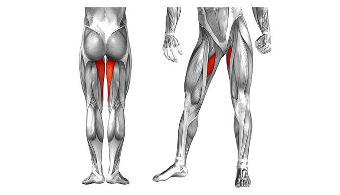 Músculos olvidados: Aductores