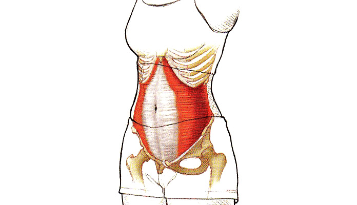 Músculos olvidados: Transverso del abdomen