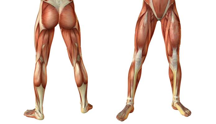 Músculos olvidados: Tren inferior
