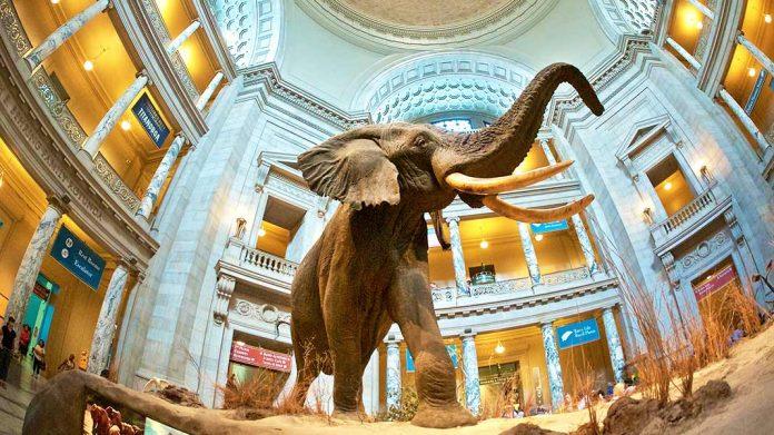 Los 15+5 museos más grandes del mundo: arte y cultura en grandes cantidades