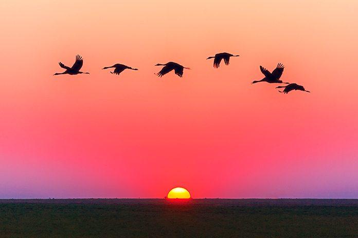 Observar a las aves es vital para la supervivencia del planeta