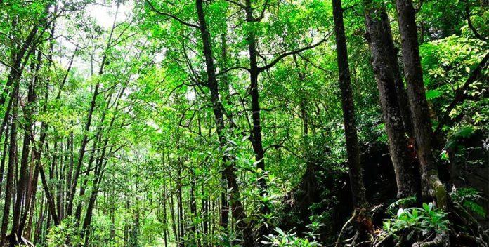 Estos ambientalistas arriesgan sus vidas para proteger la selva de Palawan.