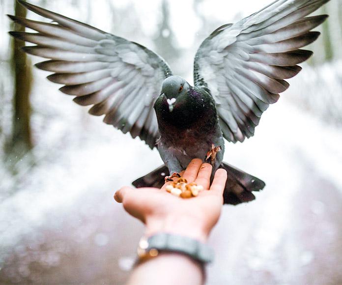 Palomas: de símbolo de la paz al maltrato consentido