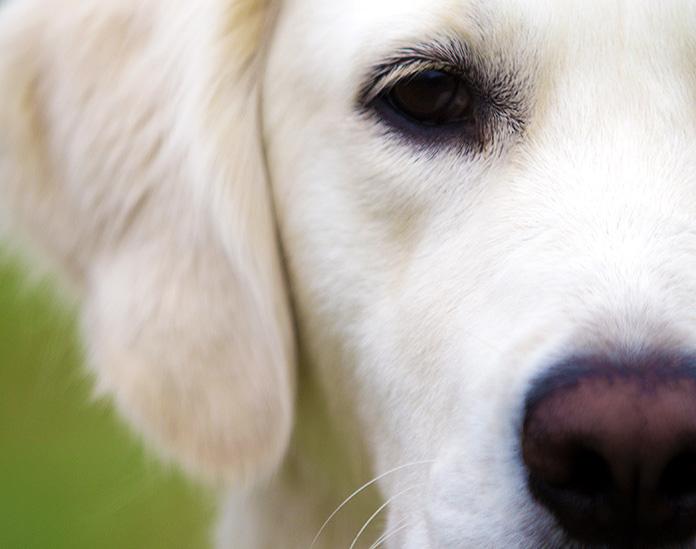 Esta perra esperó 1 mes al regreso de su dueña tras el incendio en California