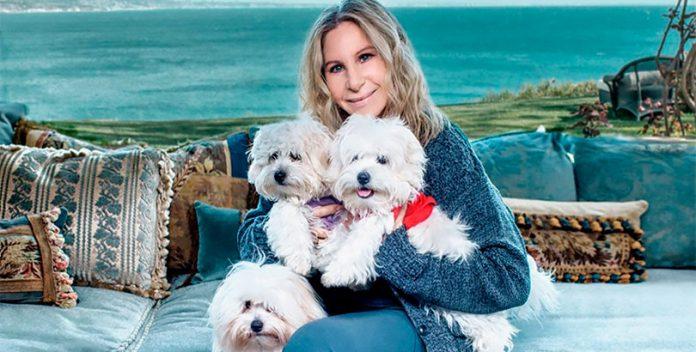 Los perros clonados de Barbra Streisand.