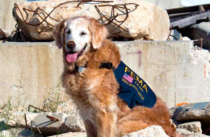 4 perros de rescate héroes del 11-S