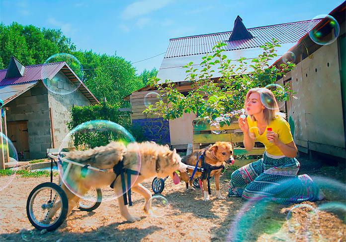 Fotógrafa Rusa se retira de su profesión para cuidar de 100 perros discapacitados