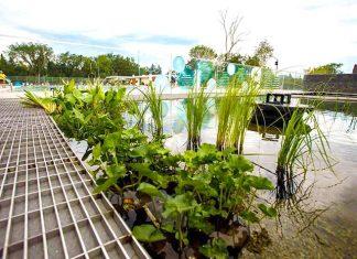 Piscina ecológica de Borden Park