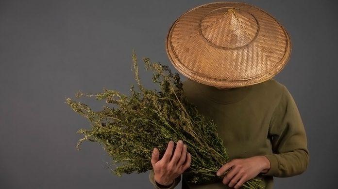 Agricultor sosteniendo un ramo de plantas secas