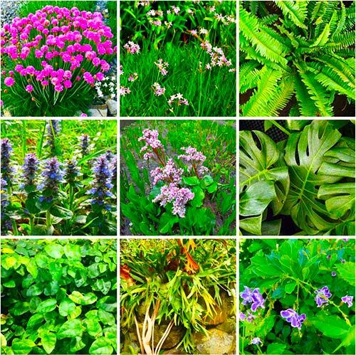 Plantas comúnmente utilizadas en jardines verticales