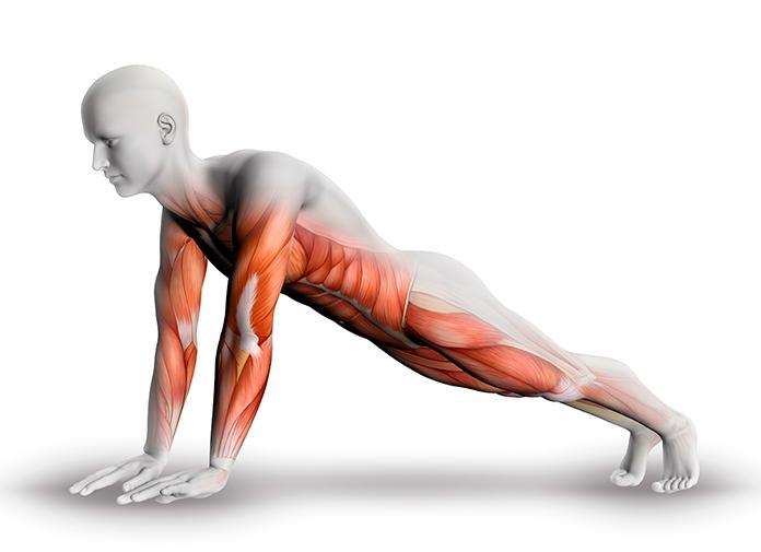 Posición de la plancha de abdominales clásica