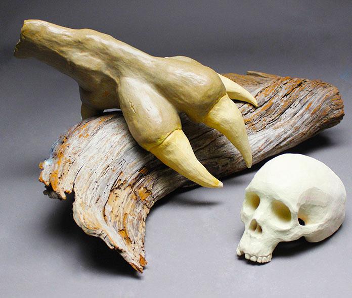 Restos fósiles del Argentavis Magnificens