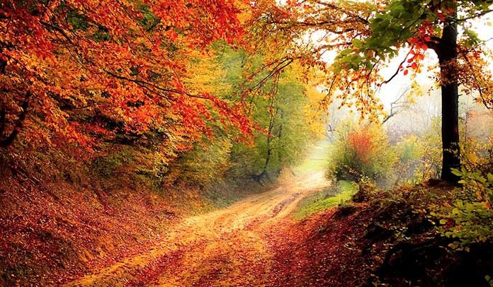 Los bosques mixtos pueden frenar el cambio climático.