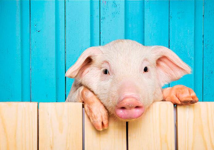 Santuarios de animales: qué son + cómo colaborar con ellos + listado de santuarios en España