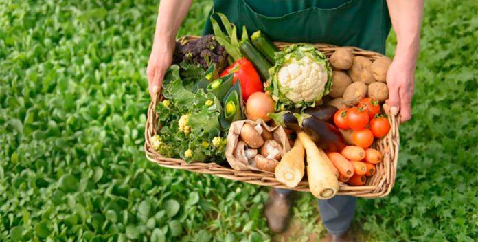 Oportunidades laborales en el sector agroecológico.