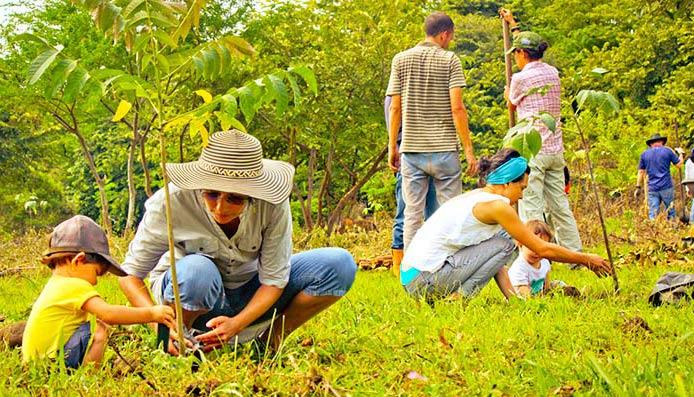 Personas sembrando árboles