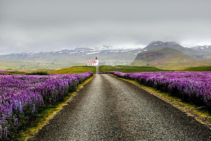 En Islandia no hay mosquitos