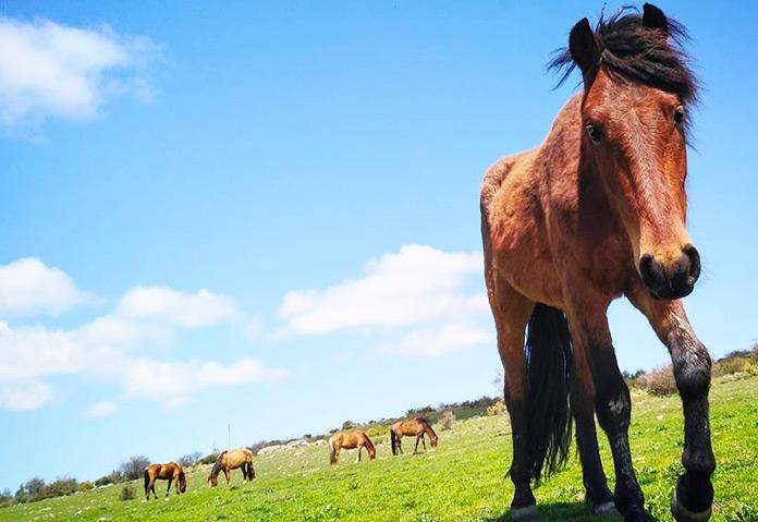 Spirit, uno de los caballos del Santuario Winston