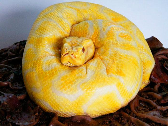 Tarta serpiente pitón albina
