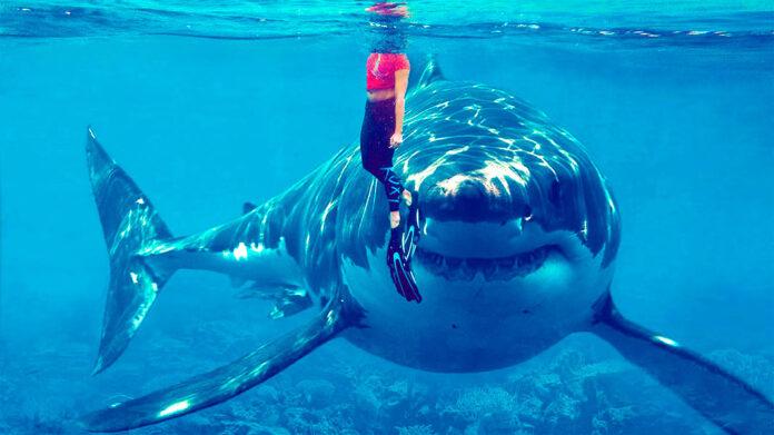 Tiburón vegetariano: un increíble descubrimiento que tira por tierra la cadena alimentaria